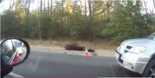 машина сбила лося