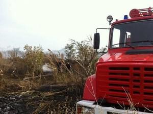 лесной пожар под Киевом