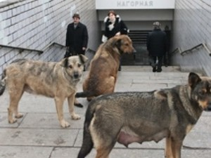 бродячие собаки киев