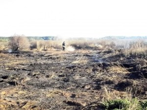 торфяники горят