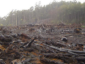 вырубка деревьев киев