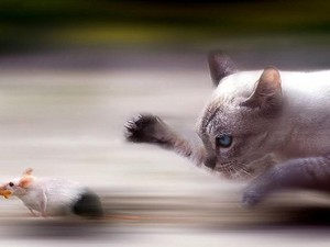 Коты должны ловить мышей