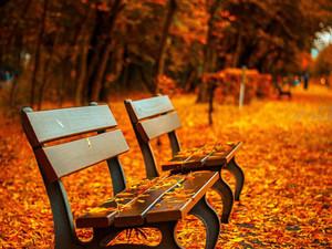 Догнать осень и повесить медальку