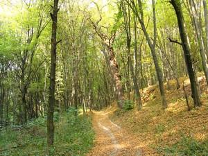 В течение последних 20 лет лесохозяйственные земли Киевщины сократились на 52%